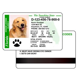 novelty id, novelty id card, driver license novelty PET ID  card, new identity software design custom